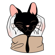 Black Kitten in Human Palms Sticker