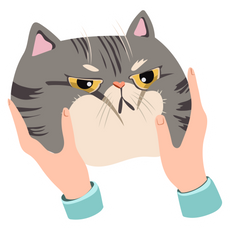 Offended Cat Sticker