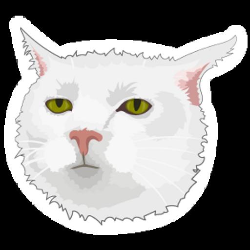 Serious Cat Meme